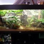 Das Aquarium nach dem Kahlschlag