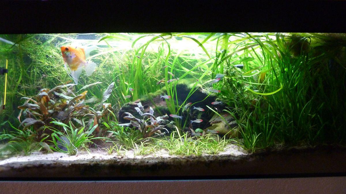 Der umzug geht weiter geralds aquarien for Skalar aquarium