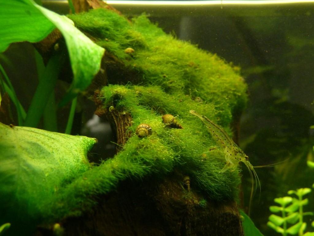 Algenbewuchs auf der Wurzel